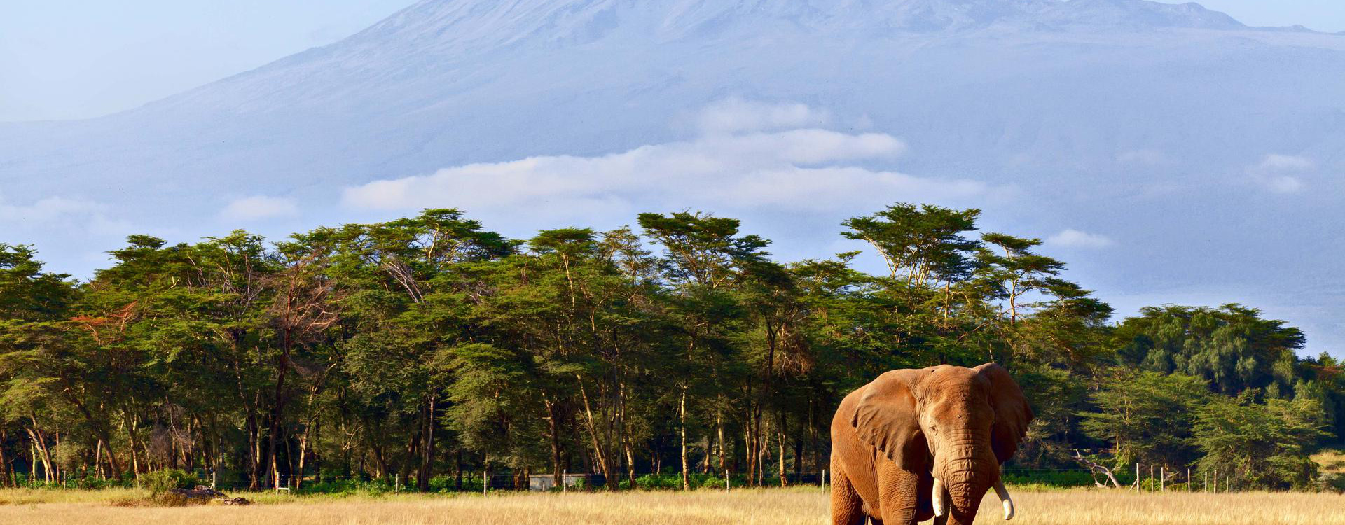 tanzanie-kilimanjaro-savane-safari-elephants