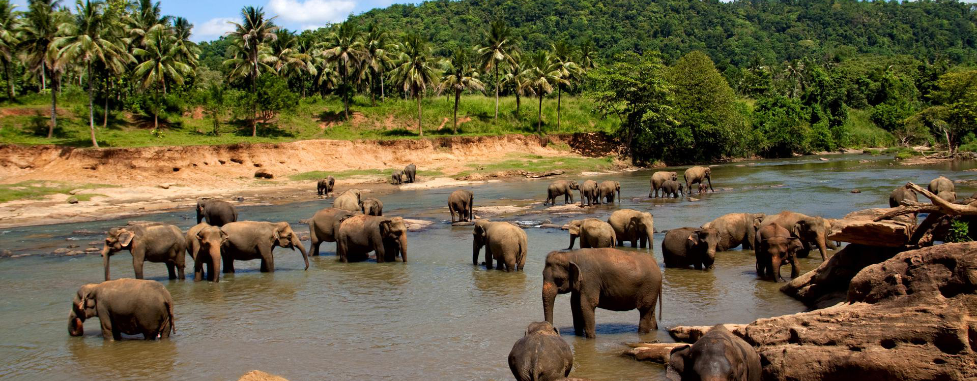 Sri-lanka-elephants