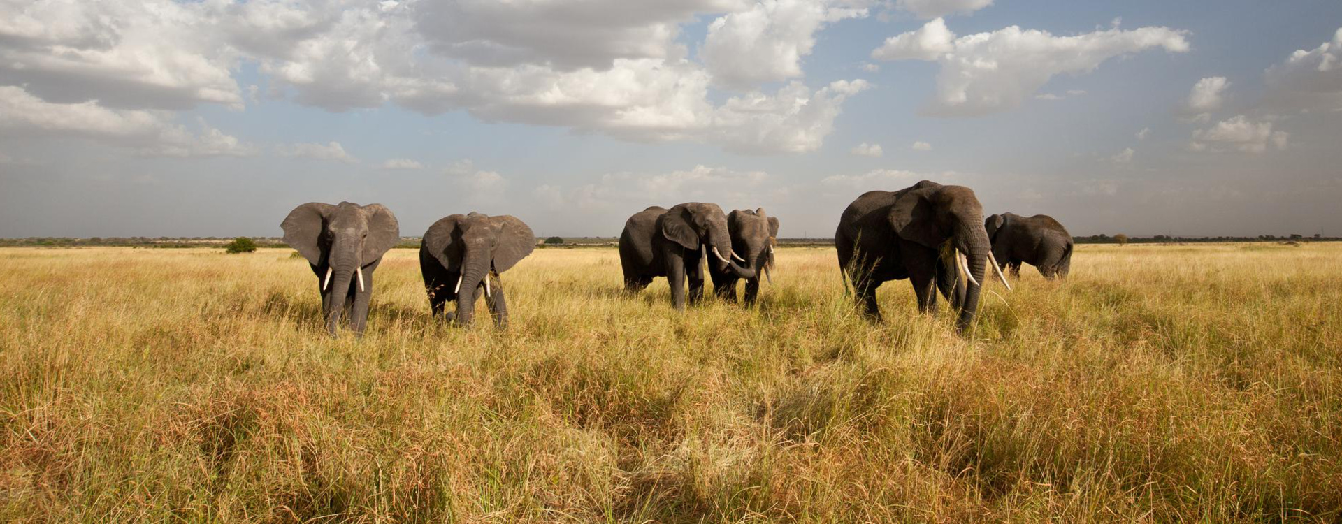 tanzanie-elephants-safari