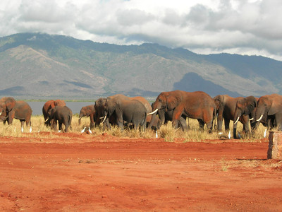 kenya-lac-jipe-elephants